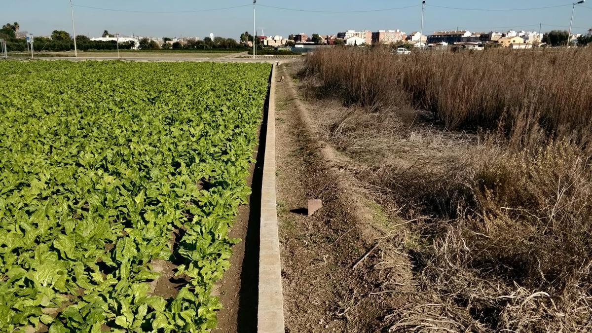 Poderoso contraste entre un campo cultivado y uno abandonado