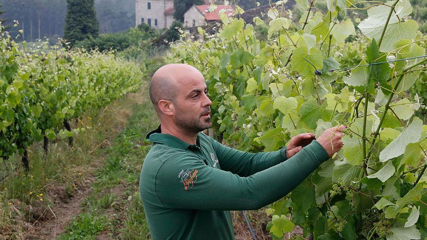 La moda del ecoturismo aumenta la compra de terrenos en Galicia para plantar viñedos