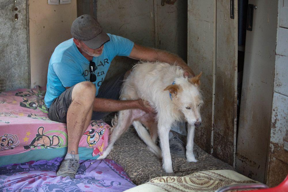 80 perros esperan un hogar desde SOS Animales Sagunt.