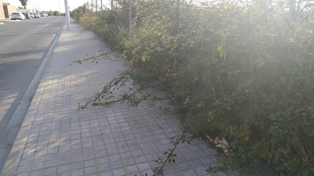 """Censuran la """"lamentable"""" imagen que presentan algunas calles del Port"""