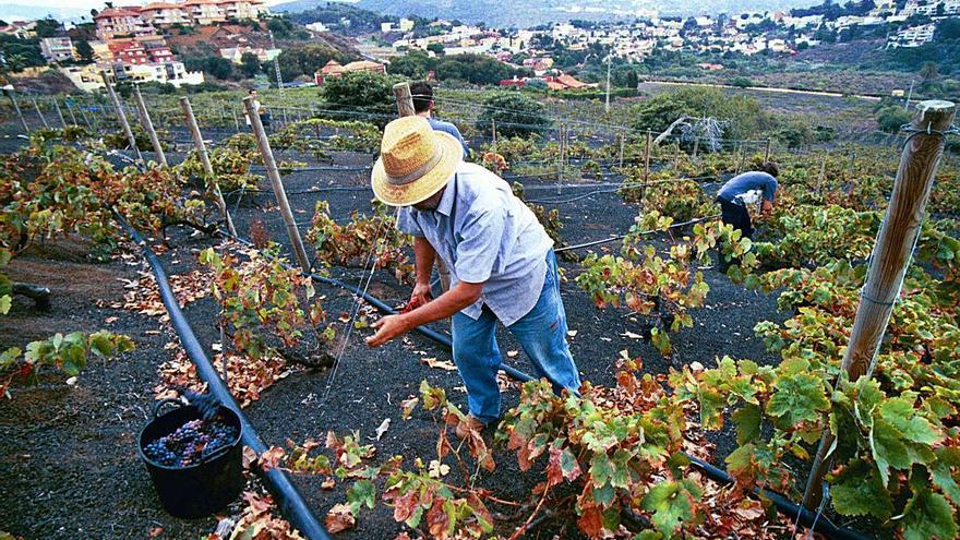 La ruta turística de la botánica, el vino y los volcanes busca el apoyo del Cabildo