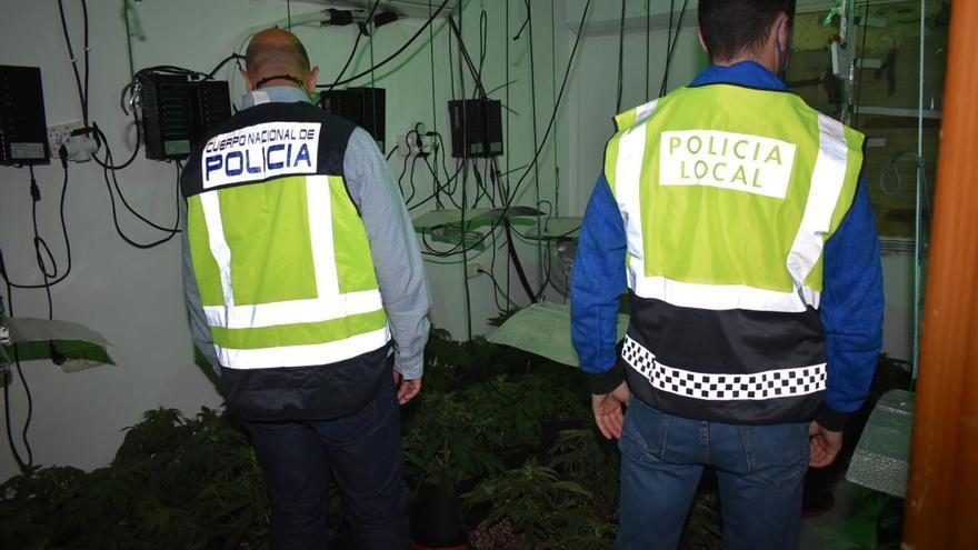 Desmantelan en Lorca un cultivo de marihuana con 121 plantas