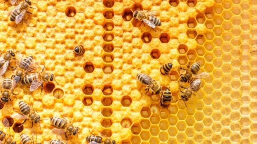 La UE restringe el uso de dos plaguicidas perjudiciales para las abejas