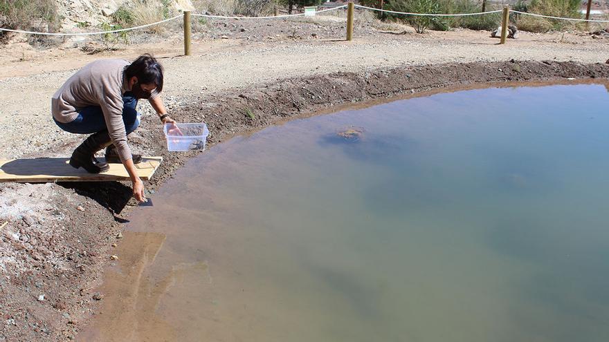 Una nueva balsa para recuperar el pez Fartet en La Mola de Novelda