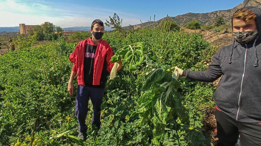 San José Obrero estrena huerto urbano y un invernadero