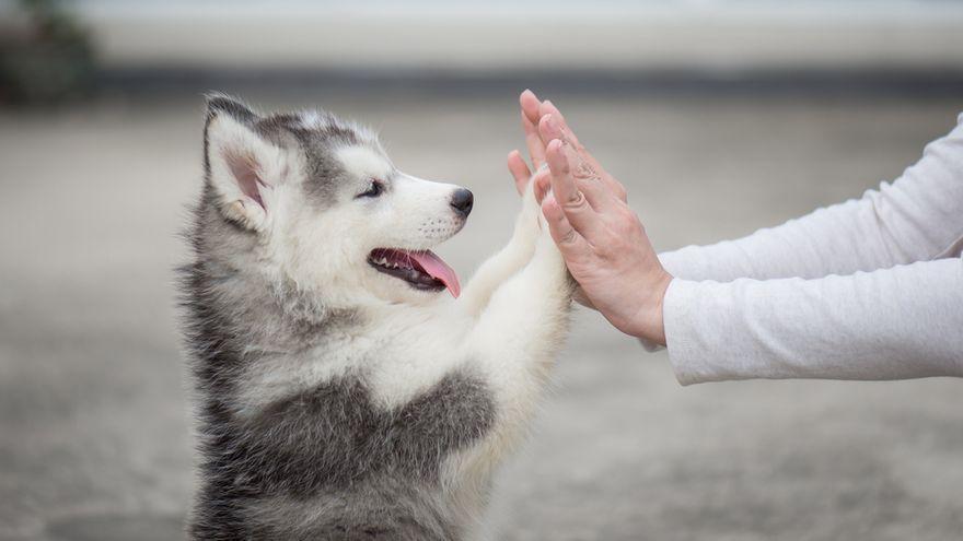 La sorprenent dada sobre els gossos que acaba de revelar la medicina veterinària