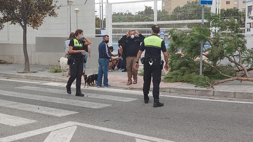 El tiempo en Alicante: la borrasca Alex trae alerta por vientos de hasta 100 km/hora