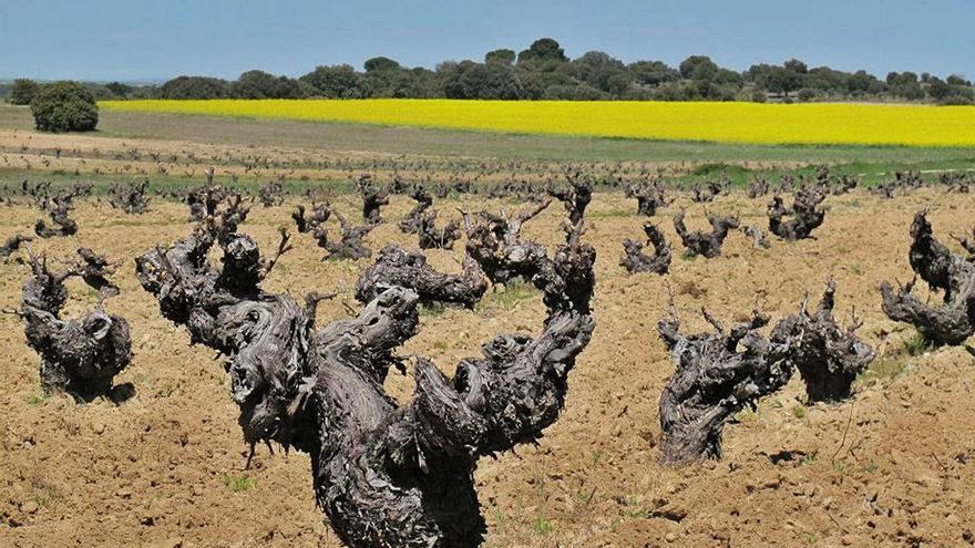 La pandemia reduce en un 20% las ventas de las bodegas de Tierra del Vino