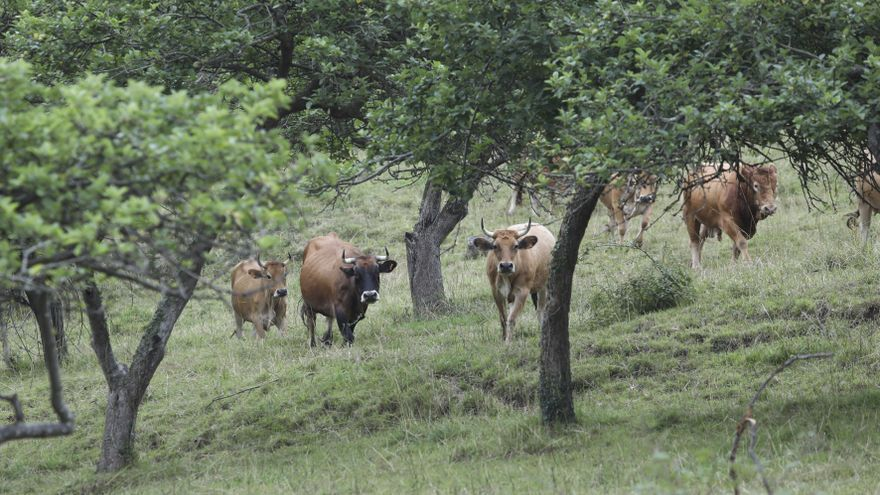 """La nueva Política Agrícola Común, """"filón"""" para la ganadería extensiva regional"""
