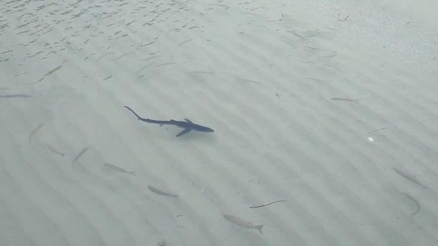 VÍDEO: Un tiburón se pasea por la orilla de las islas Cíes