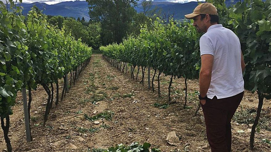 L'Institut del Vi recupera antigues varietats dels Pirineus a la Cerdanya