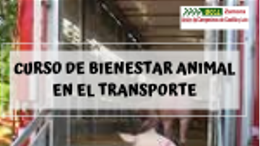 Bienestar Animal en el Transporte