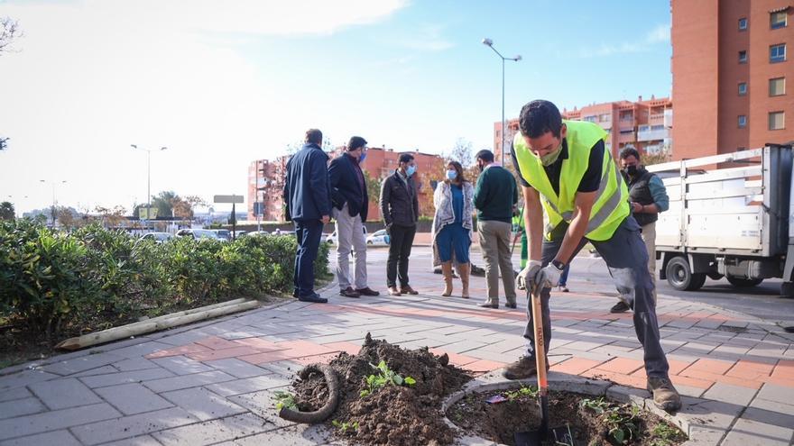 El Ayuntamiento de Málaga planta 12.000 nuevos árboles en su última campaña de reforestación