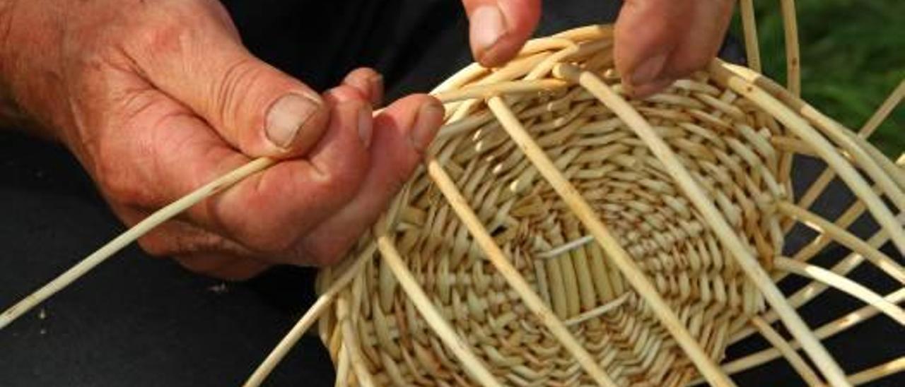 Un proyecto combate la plaga de la caña en los ríos