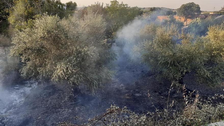 Denuncian la quema reiterada de un olivar en Aliseda