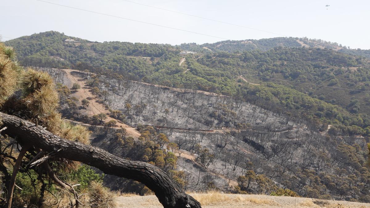 Parajes quemados en el incendio de Sierra Bermeja en una imagen de archivo