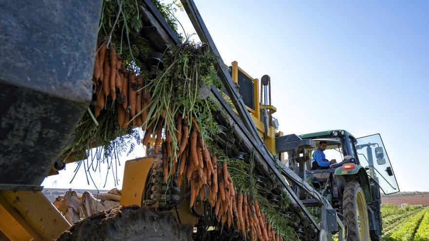 Las hortalizas más consolidadas del mercado español tienen sede en Villena