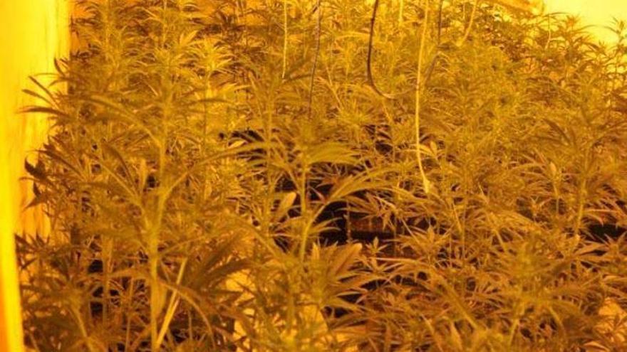 Detienen a un hombre reclamado por dos juzgados y que cultivaba marihuana en Badajoz
