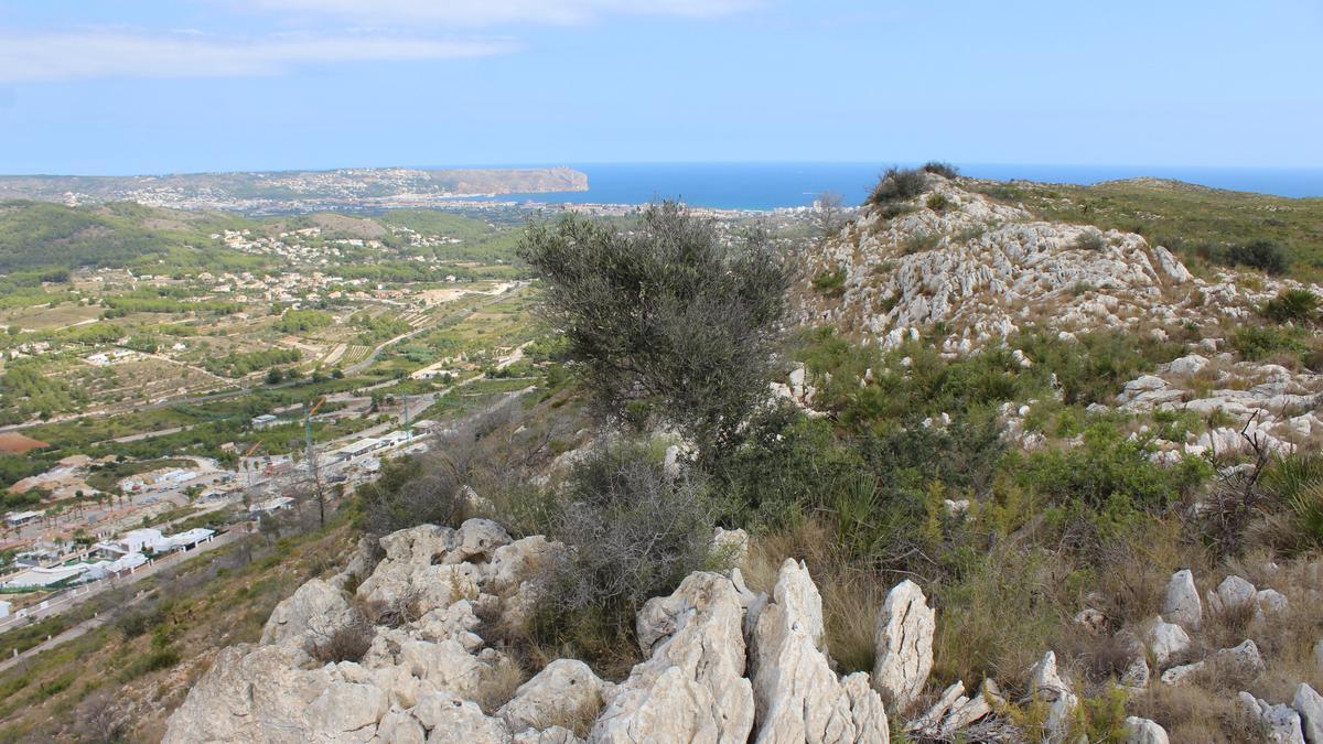 Arbustos en la cresta de la montaña de la Granadella, en Xàbia