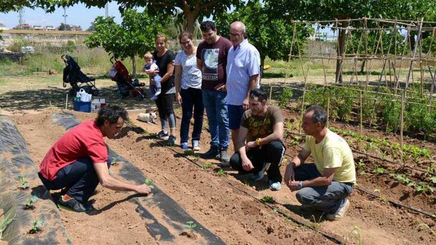 Paiporta adjudicará 19 huertos urbanos a personas jubiladas