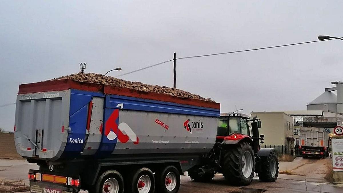 Camiones cargados de remolacha acceden a la Azucarera de Toro. | M. J. C.