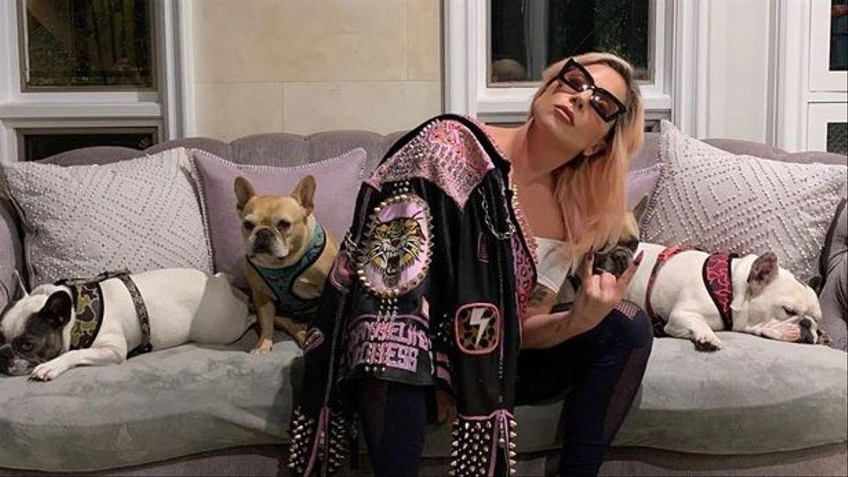 Lady Gaga ofrece más de 400.000 euros de recompensa por sus perros robados