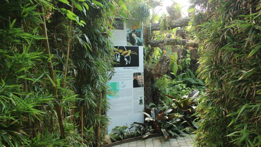 El Orquidario de Estepona dedica un espacio a una nueva especie descubierta en Guatemala