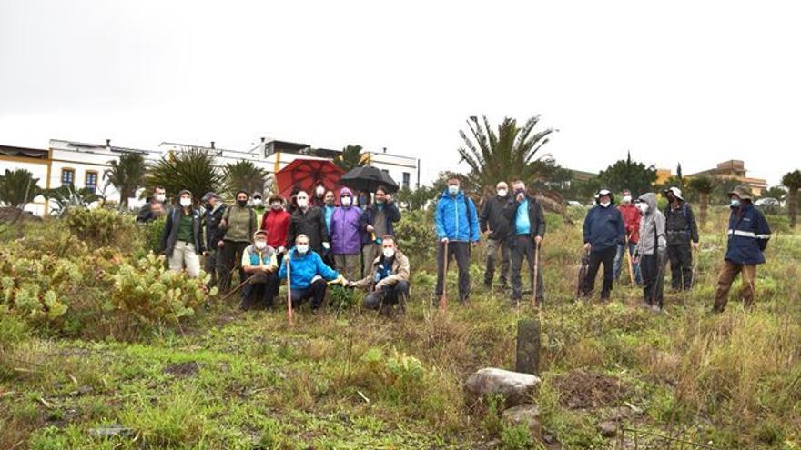 El cambio climático, los incendios y la proliferación de especies asilvestradas, graves problemas para la laurisilva canaria