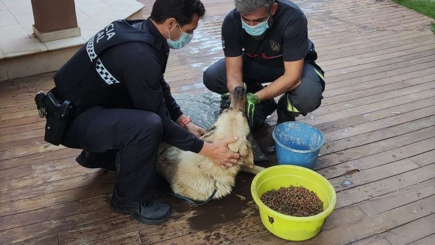 Rescatado un perro que llevaba dos días dentro de una piscina