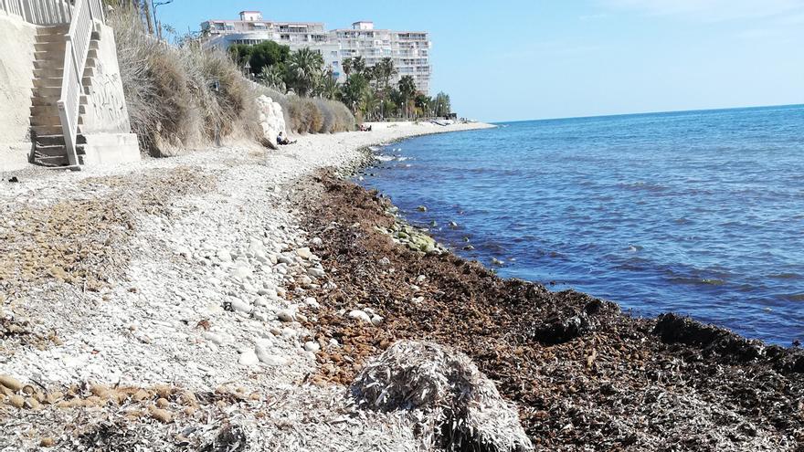 Investigadores de la Universidad de Alicante descubren nuevos compuestos bioactivos en los bancos de posidonia seca