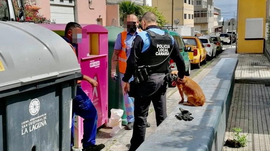 Rescatan a un perro que fue abandonado en un contenedor