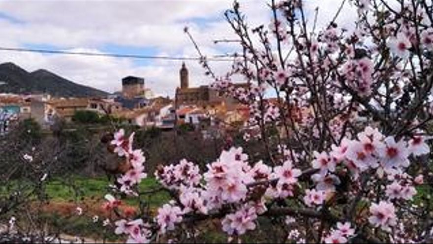 Éxtasis en flor en Alcalalí
