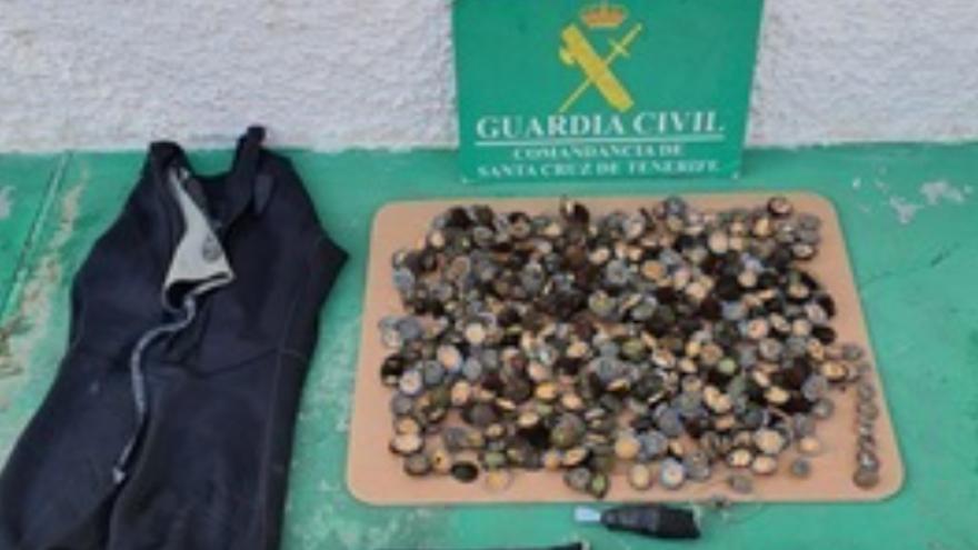 Incautan 10 kilos de lapas y denuncia a una persona por marisqueo y venta en Tenerife