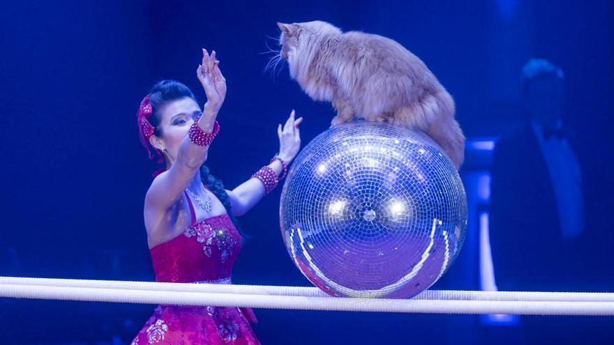 Compromís vol que Figueres obri expedient al Festival del Circ per l'ús d'animals