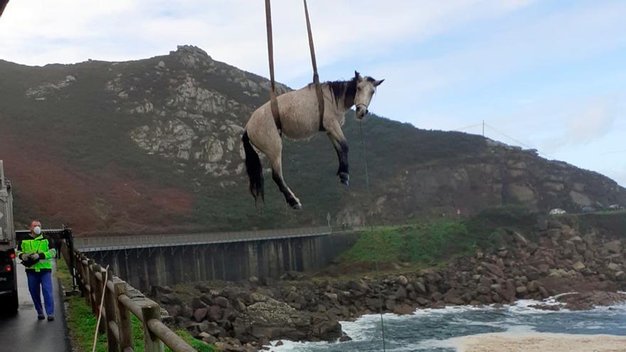 Rescatado un caballo en Baiona que cayó al mar en Cabo Silleiro