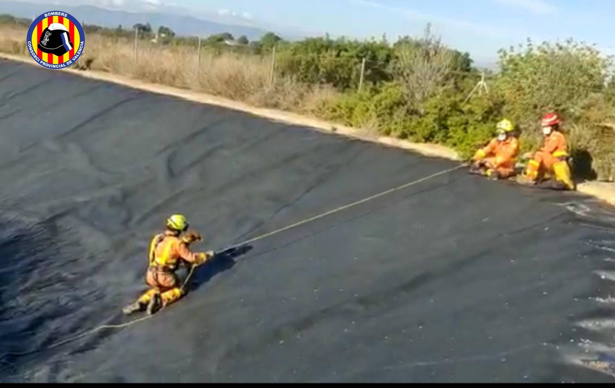 Los bomberos rescatan a un perro que cayó a una balsa en Llíria