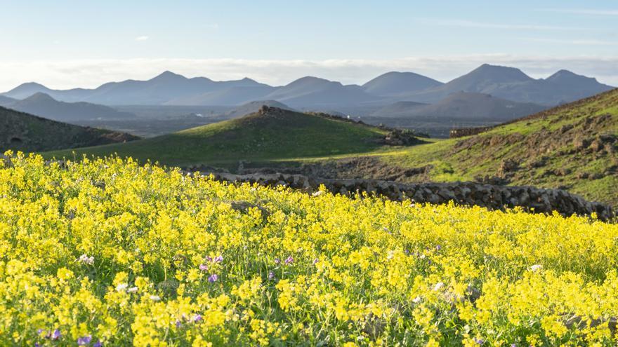 Timelapse 'Colourful Island' sobre la primavera adelantada en Lanzarote