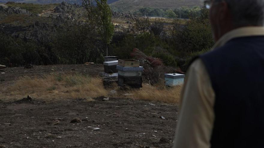 La Junta concede 193.000 euros para reforestar una zona quemada en Ungilde