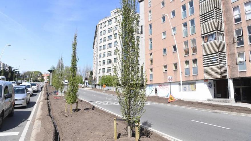 El Ayuntamiento plantó 749 árboles y taló 403 desde el cambio de gobierno