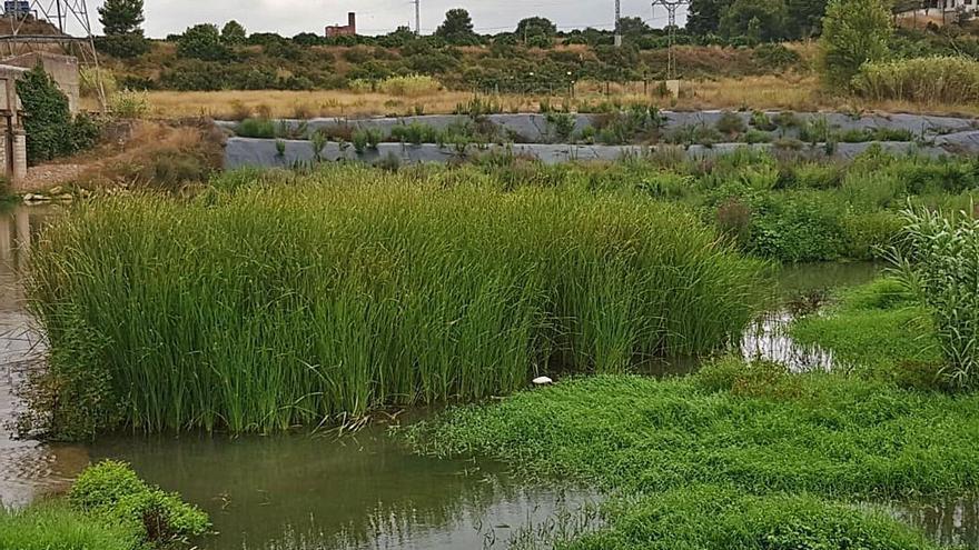 Ecologistas y entidades reclaman una gestión conjunta del Parc del Túria