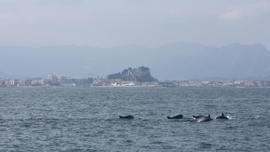 El cabo de Sant Antoni, reserva de cetáceos: avistan en un día tres grupos de delfines