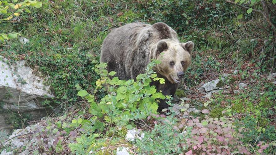 """""""Era imposible molestar a los osos"""", dicen dos acusados de desobediencia"""