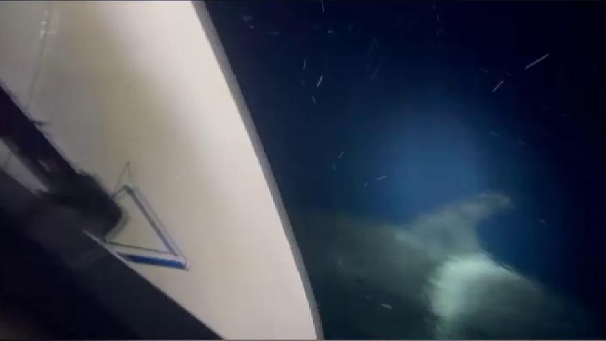 Cuatro orcas atacan un velero en el Estrecho de Gibraltar