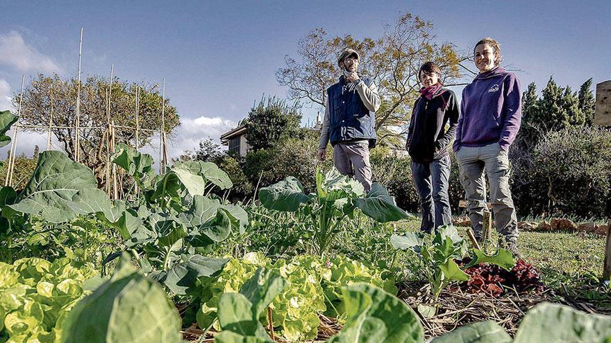 Der vergessene Gemüsegarten von Palma erlebt eine Renaissance