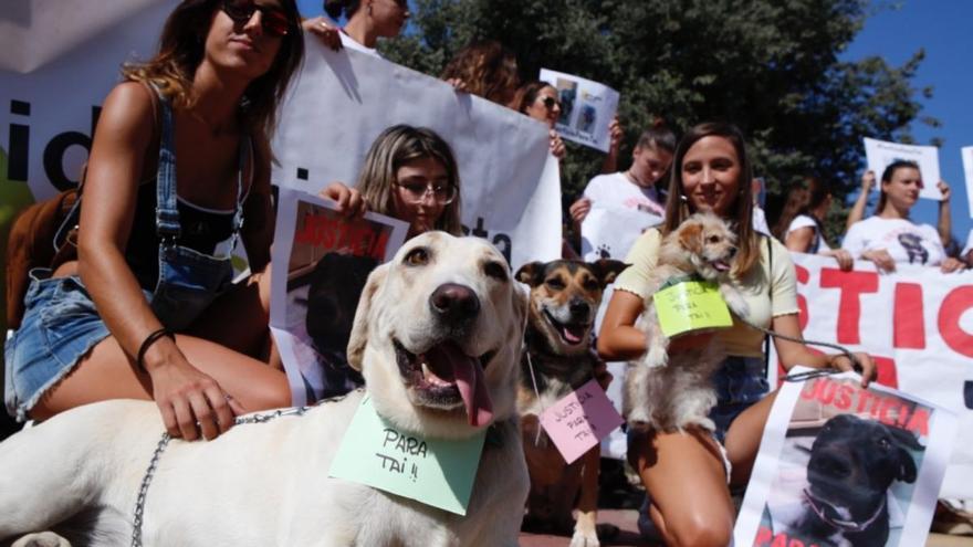 Casi un centenar de personas protestan por la muerte de Tai, una perra abatida por la Policía Local