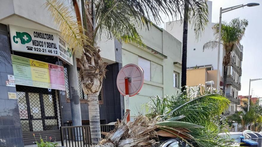 Un hombre herido tras caer una hoja de palmera en Santa Cruz