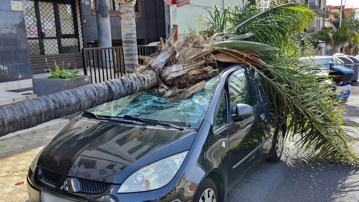Una palmera cae sobre un árbol aparcado en la avenida Bélgica.