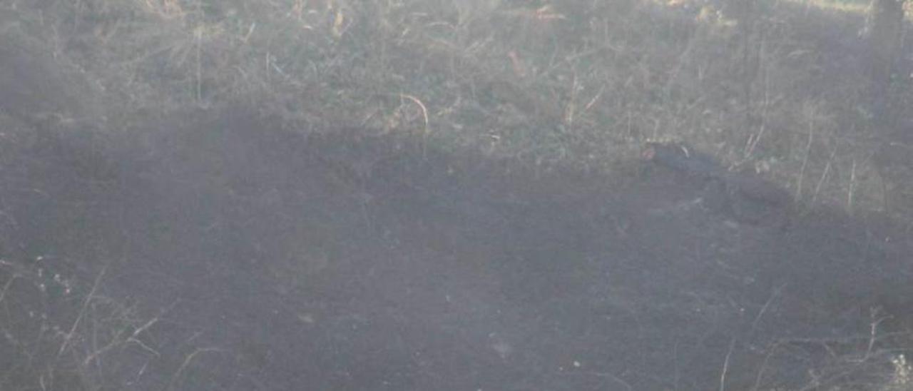 Un caballo en un monte quemado, cerca del polígono de Novales.