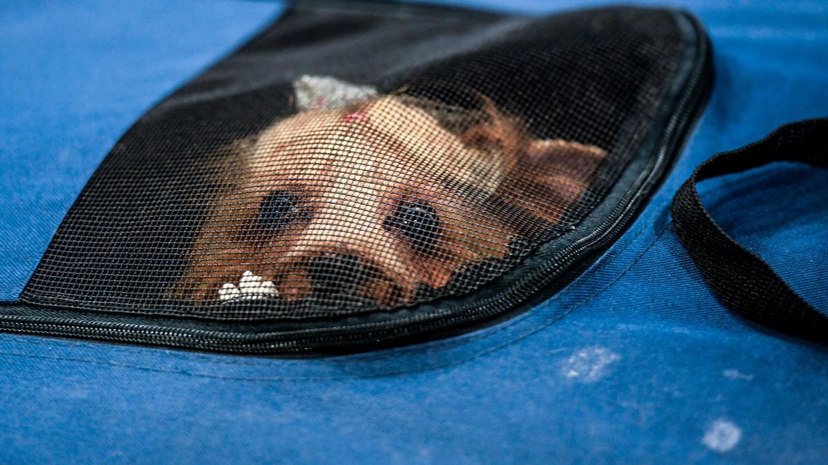 Consejos para viajar con los animales de compañía.