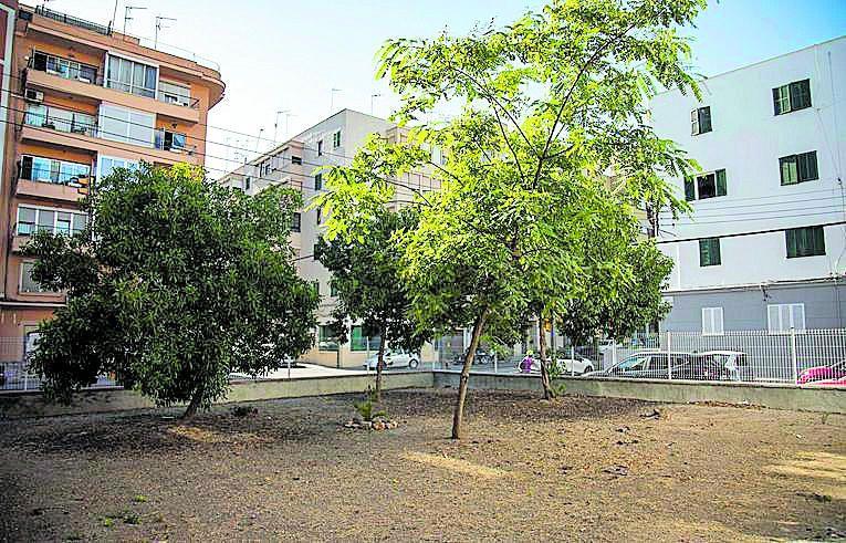 Varios árboles en el patio vallado de la manzana A.